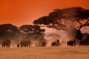 African red sunset with elephants