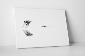 Buy online now: Iceland bird jump and fly - Perfect image for home or office wall with light tone and soft mood - Have a look also to our artistic composition!