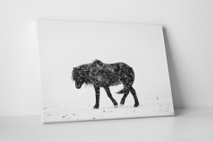 Cavallo Islandese, Islanda - Stampa Fine Art d'autore su tela artistica | Icelandic horse into the white storm - Fine Art print on canvas - Limited edition