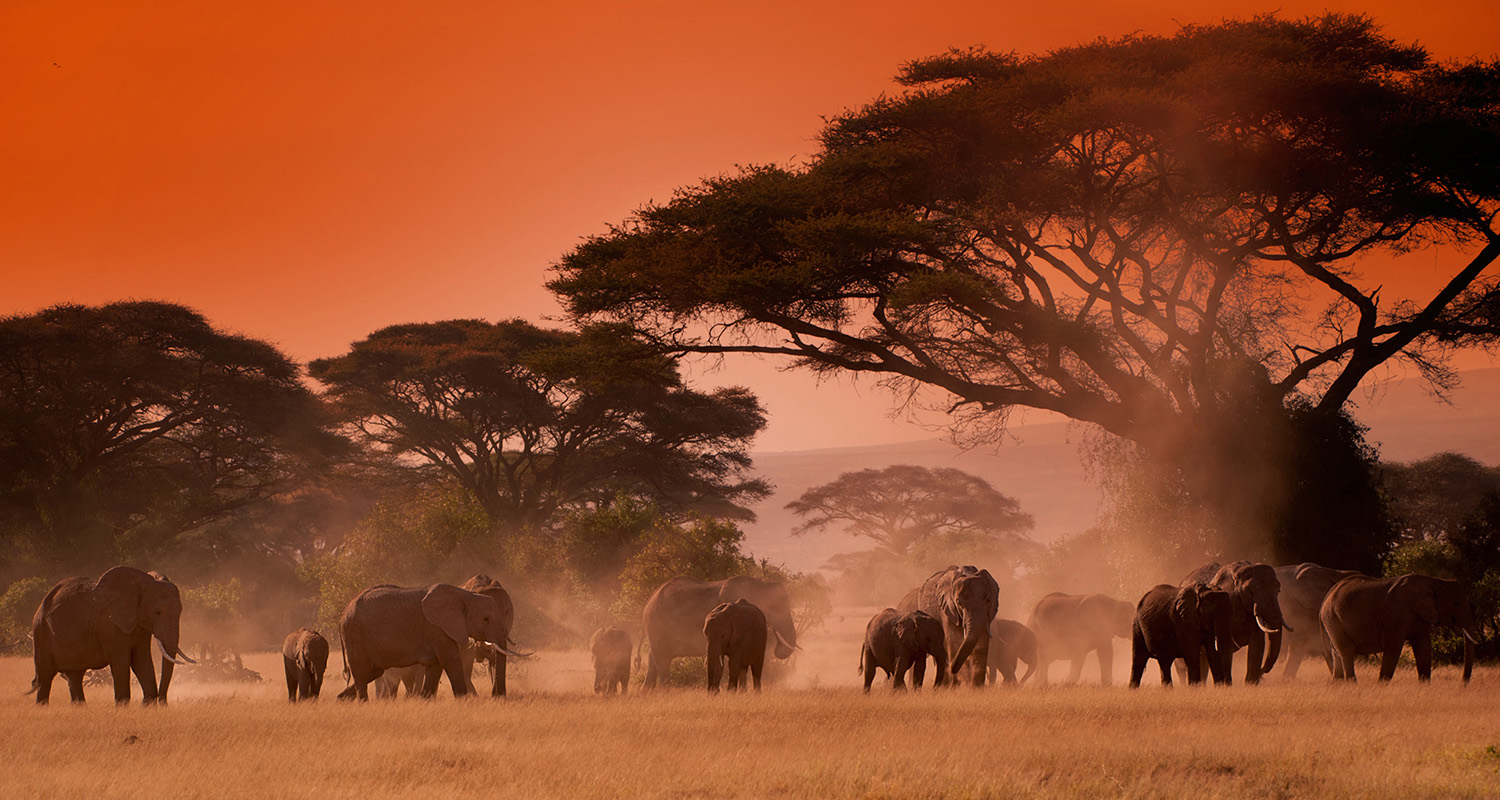 AFRICA, KENYA | Tramonto con elefanti durante safari fotografico - African red sunset with elephants during a photo safari
